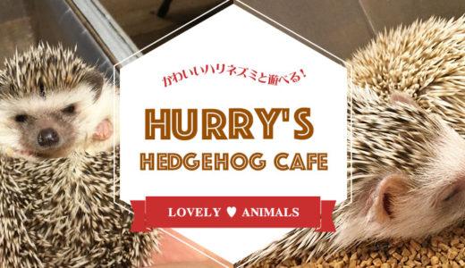 ハリネズミカフェのススメ。ちょっと珍しい生き物に癒されたいあなたへ。