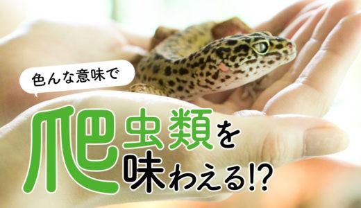 爬虫類好きを夢中にさせる動物園@伊豆、iZoo!