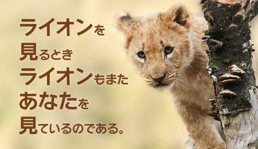 猫科猛獣類好きへ。ライオンの赤ちゃん抱っこ♥のススメ@富士サファリパーク